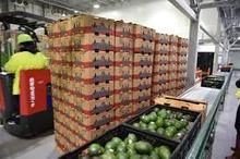 AVOCADO, FRESH AVOCADO HASS AND FUERTE AT AFFORDABLE PRICES