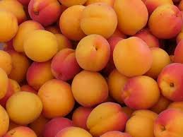 Fresh Apricot FRUITS FOR SALE