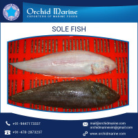 Fresh Frozen Sole Fish SEAFOOD