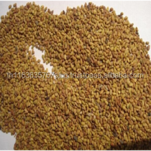 alfalfa seed for sale