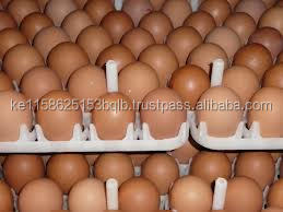 FRESH WHITE/BROWN CHICKEN EGGS