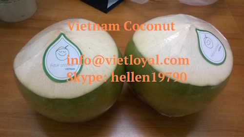 Vietnam Fresh Young Coconut - Fresh Mature Coconut - Dried whole coconut