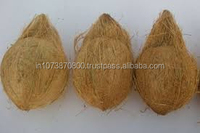 Good Quality Matured coconut export to Iran