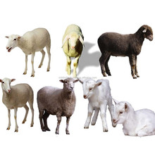 Sheep slaughter unit goat mobile slaughter house cattle slaughtering equipment professional production Farm Machinery