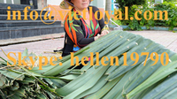 VIETNAM BEST PRICE COCONUT ROOF ( 100% NATURAL)