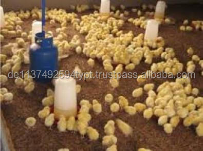 Day Old Broiler Layer Chicks and Fertile Hatching Eggs