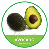 HIGH QUALITY FRESH HASS AVOCADO // ALLIGATOR PEAR // VIETNAMESE AVOCADO