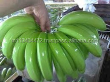Indian Farm Products High Quality for sale Bunches of Fresh Green Cavandish Banana