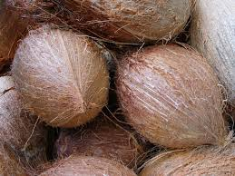 Shell Mature Full Husk Coconut