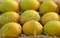 GRADE A Farm Fresh Sweet Mango for sale