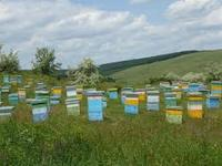 bee wax , bee polen, propolis, bee venom , honey