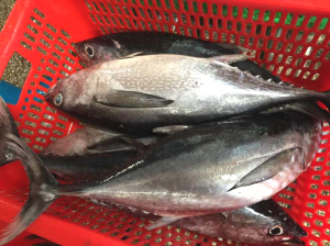 Longtail Fresh Tuna with Blackfin