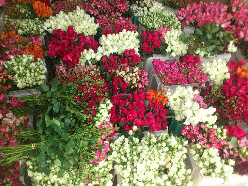 FRESH CUT FLOWERS OF ETHIOPIA