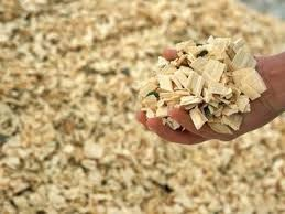 Wood chips for making pulp/biomass fuel in Viet Nam