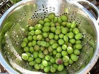 High Quality and Best Quality Fresh Olives, Table Olives, Olives Green