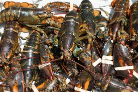 Whole Frozen Lobster and Tails / Live Lobsters For sale Fresh and frozen Lobsters