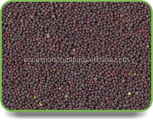 musard seeds ISO certified export company