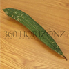 Fresh Luffa / Petola / Vegetable / Fruit