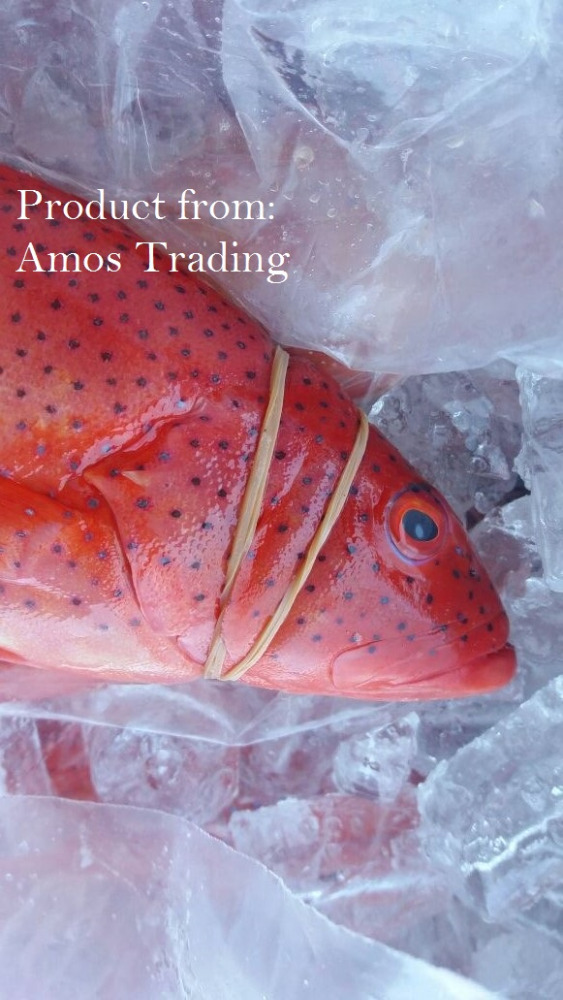 Fresh Red Coral Trout