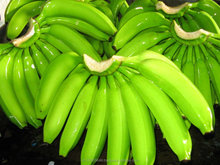 Fresh Green Cavendish Banana Best Quality from Vietrnam