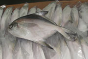 Indian Seafoods Silver Pomfret Fish