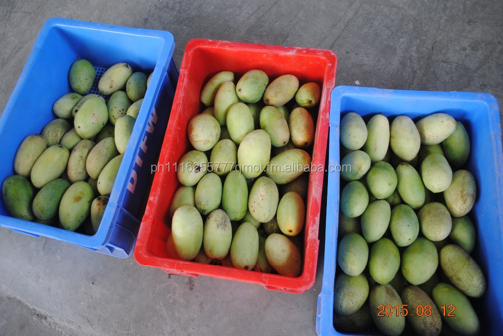 Philippine Fresh Mangoes (Vapor Heat Treated & Fresh Water Treated)