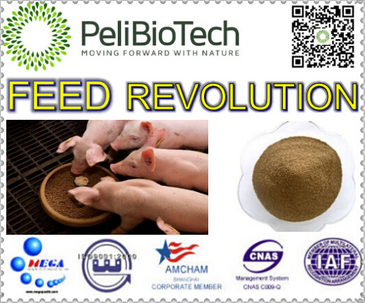 factory supply feed ingredient improving overall feed digestibility