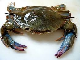 Fresh Soft Shelled Blue Crabs