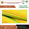 Crisp And Natural Yellow Maize From Agricultural Product Supplier