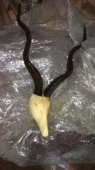 Handcrafted Resin, Antlers head sculpture/ Bust/ fossils