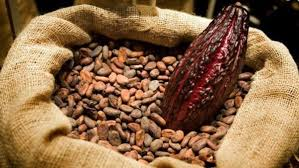 Fine and aromatic Venezuelan Cocoa in grain. Cataloged the best in the worl