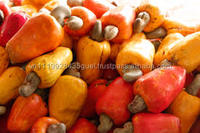 H_high quality good for health white raw Cashew Nut for Best Price