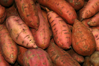 Fresh Purple and brown Sweet Potato For Sale