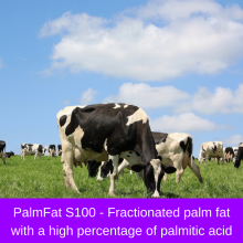 Rumen Bypass Fat (99% Palm Fat)