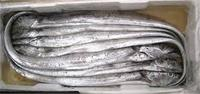 RIBBON FISH / FROZEN RIBBON FISH / SEA FOODS