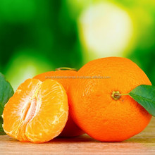 Tangerine Essential Oil Best Beneficial for acne