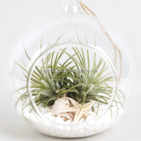 "Air Plants Tillandsia DIY Terrarium Kit "" White Sand Beach "" by Joinflower"