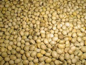 High Quality Grade A Soybeans