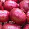 Supply of Big Onion | Rate of Big Red Onion | 55mm Onion Price