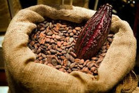 Matured cocoa beans