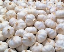 China exporter fresh garlic price