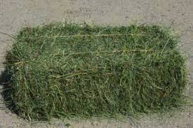 Alfalfa/Lucerne hay cheap price