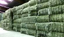 Highly Cheap high quality Animal feed Alfalfa Meal / Alfalfa Hay for sale/Timothy Hay for sale