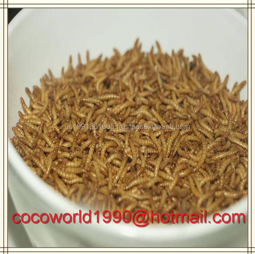 tenebrio molitor Dried Mealworm dry pet food