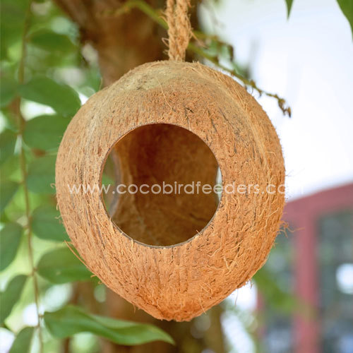 WHOLE COCONUT SHELL FOR BIRD FEEDERS