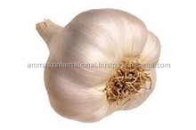 100% Natural Aromatic Essential Oil Garlic Oil Best Price Wholesale