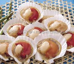 Frozen Half Shell Sea Scallop
