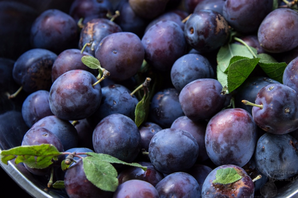 FRESH PLUMS fresh plum price , Fresh Black Plums , Fresh plums for sale