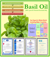 Hot sale Product of Natural Basil Oil at Reasonable Price