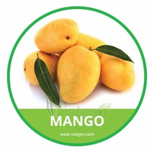 HIGH QUALITY FRESH MANGO /CAT HOA LOC MANGO